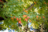 20151015-1_Fall Campus_131