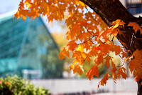 20151023-2_Fall Campus_044