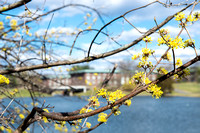 20160321-2_Spring on Campus_110