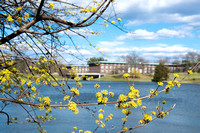 20160321-2_Spring on Campus_106