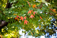 20151015-1_Fall Campus_135