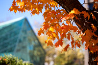 20151023-2_Fall Campus_046