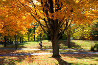 20151026-1_Fall Campus_25